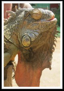 Life in Thailand XploreAsia Blog