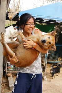Volunteer Abroad with Rescue Paws