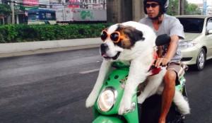 facebook-dog-and-bike-950x550