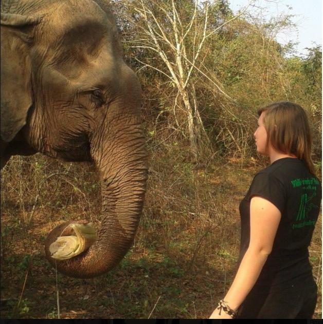 Teach abroad: XploreAsia team member Becca working with elephants