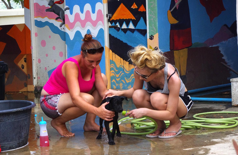 XploreAsia Dog Wash Rescue Paws