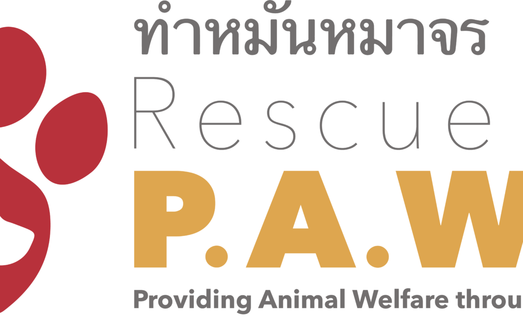 Volunteer in Thailand: An Interview with Rescue P.A.W.S.