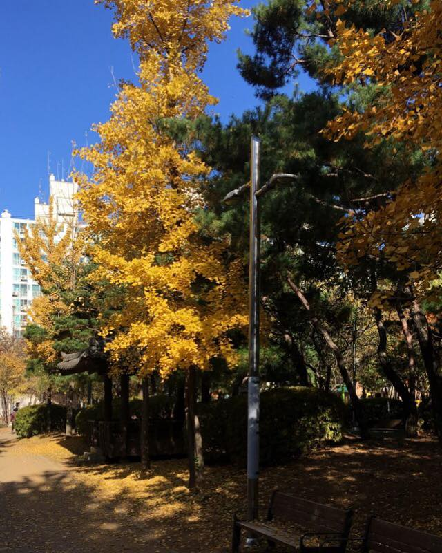 A street in Gimpo featuring beautiful fall colours. When people look for teaching jobs in Korea, they normally think of Seoul, but smaller towns have a lot to offer.