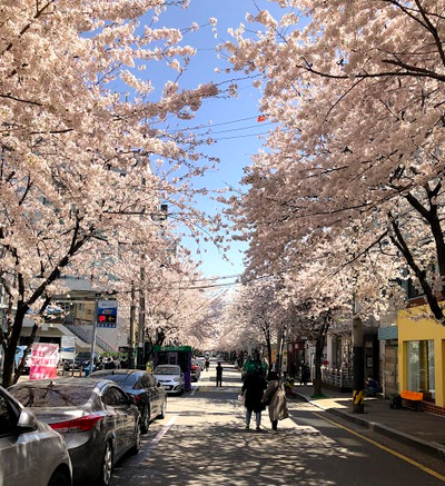 Another beautiful shot of cherry blossoms- I loved this season so much!